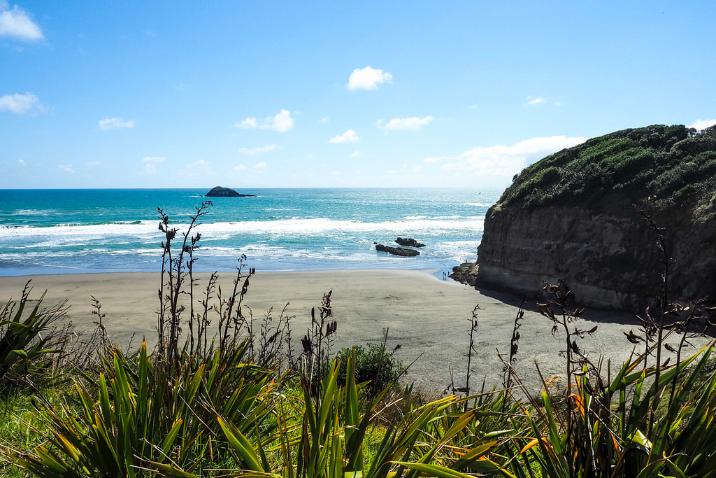 A view over a beach on a sunny day with native New Zealand flax in the foreground.