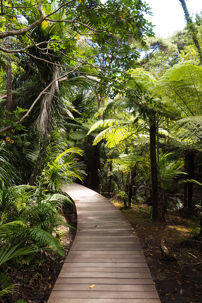 A boardwalk surrounded by New Zealand rainforest.