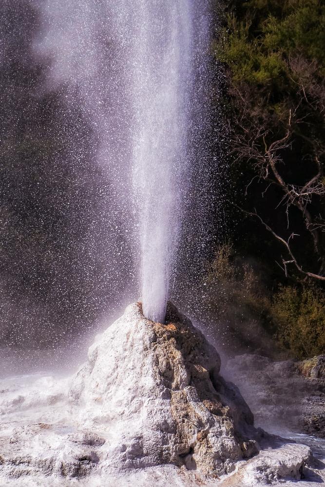 Geyser, Rotorua, New Zealand