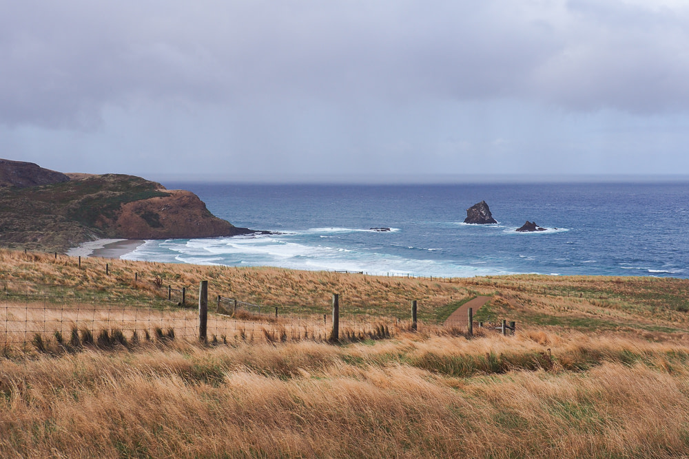 Sandfly Bay, Otago Peninsula, New Zealand