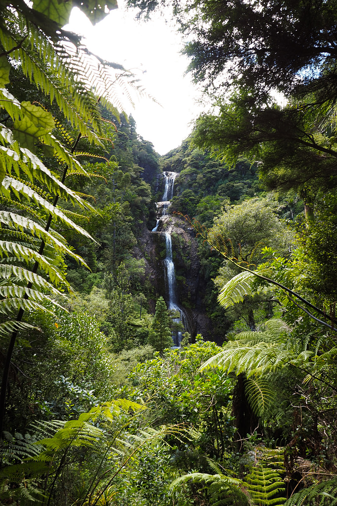 View of Kitekite Falls framed by native New Zealand plants.